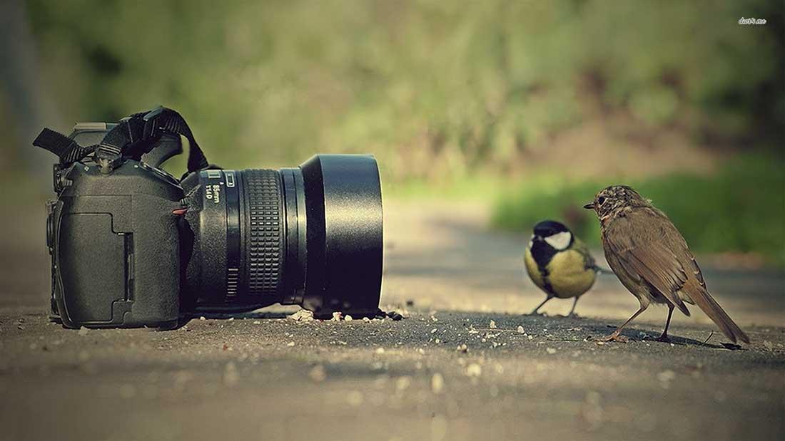 Đăng ký bản quyền tác phẩm nhiếp ảnh