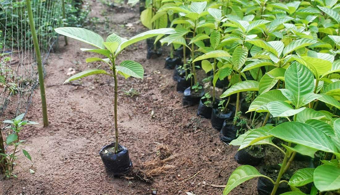 Thông báo một số giống cây trồng mới được công nhận