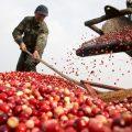 phát triển nông sản VN bằng bảo hộ SHTT ở nước ngoài-sblaw