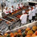 Cần phải có chiến lược xây dựng và truyền thông thương hiệu mạnh mẽ cho các sản phẩm nông sản Việt Nam-sblaw