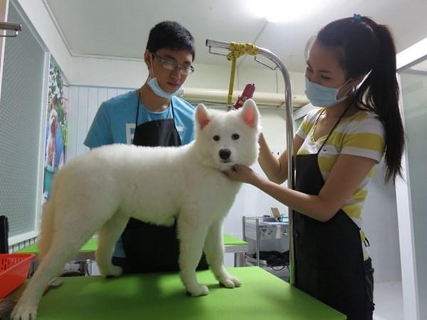 Nhà đầu tư nước ngoài muốn hoạt động dịch vụ thú y tại Việt Nam, có được không?