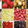 Muốn xuất khẩu nông sản sang Nhật Bản phải đáp ứng những điều kiện gì-sblaw