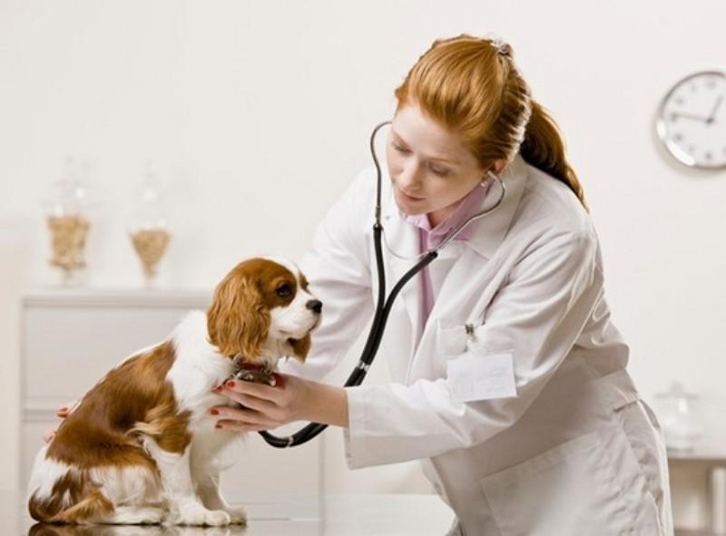 Thủ tục cấp giấy chứng nhận đủ điều kiện nhập khẩu thuốc thú y