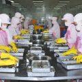 Quy định về khám sức khỏe đối với người lao động làm việc tại bộ phận chế biến thực phẩm bao gói sẵn-sblaw