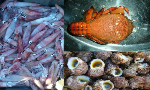 Muốn kinh doanh hải sản đông lạnh quy mô nhỏ cần thực hiện thủ tục gì?