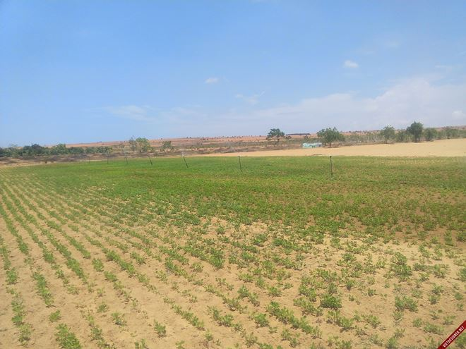 Phải xử lý thế nào khi kê khai nhầm diện tích đất?
