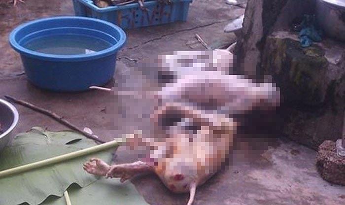 """Hành vi giết khỉ """"khoe"""" Facebook có thể phải lĩnh án tù"""