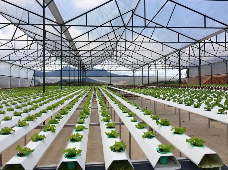 Hỗ trợ cho dự án đầu tư  trong lĩnh vực nông nghiệp