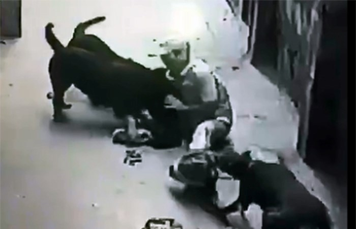 Chó pitbull tấn công, cắn chết người: Ai chịu trách nhiệm?