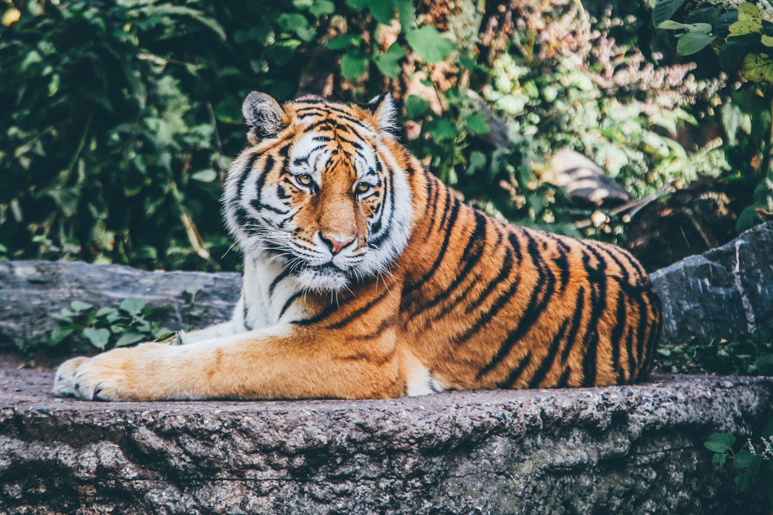 Quy định pháp luật về chế tài đối với vi phạm về động vật hoang dã